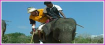 Elephant Polo Tournament Nepal